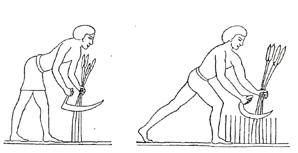 Zeichnung von ägyptischen Schnittern mit Sichel