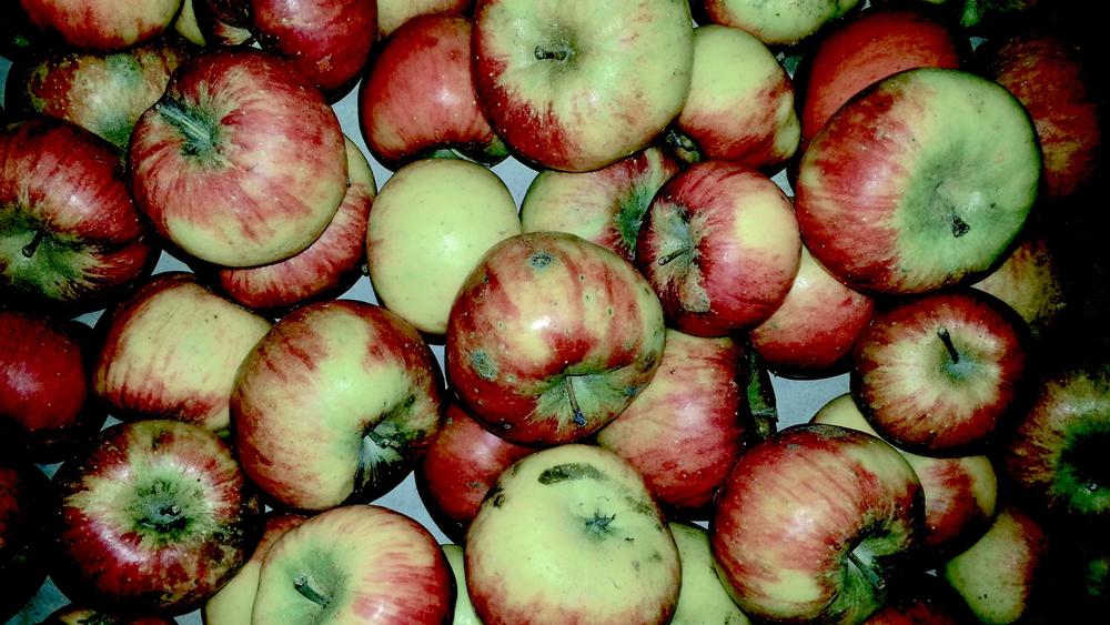 Naturbelassene Bioäpfel
